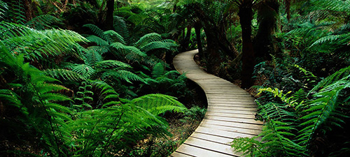 stockvault-path-in-nature124348