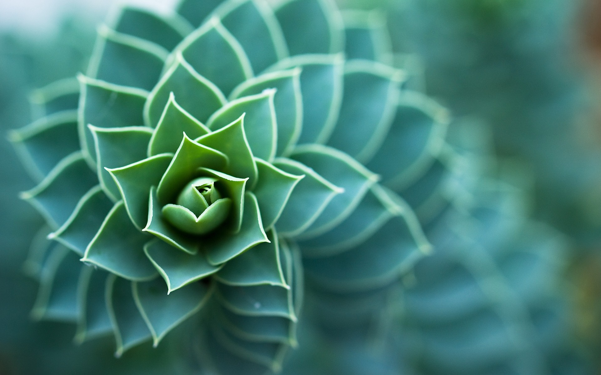 nature-photos-2012-7