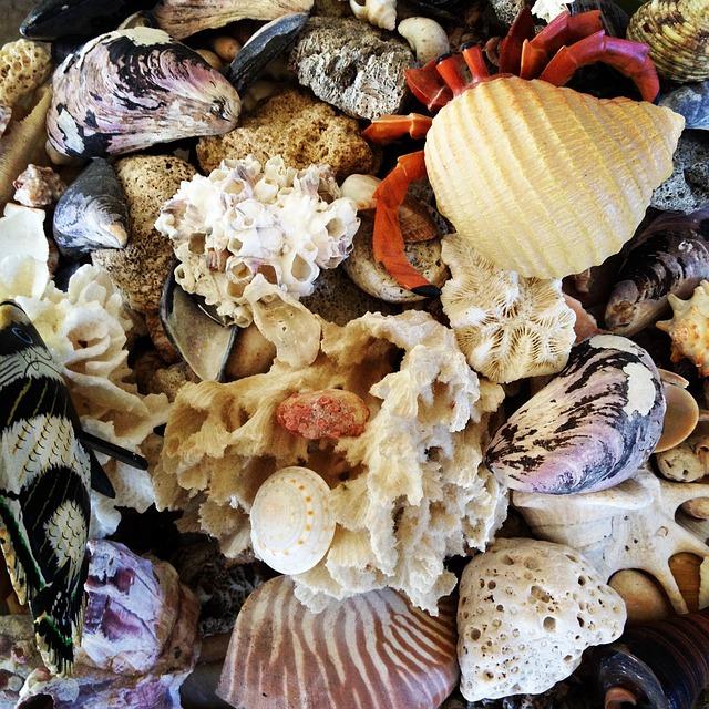 seashell-476746_640