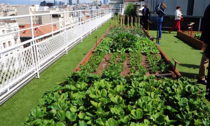 Agricultura-Urbana7.jpg
